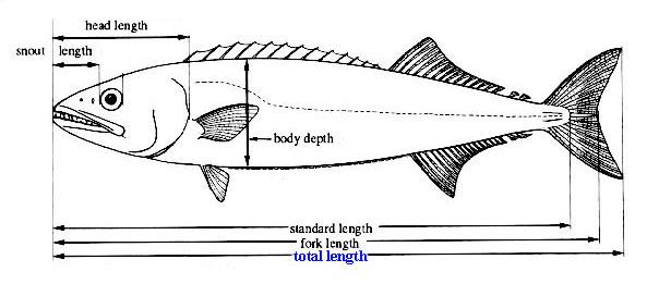 lengthdiagram.jpg